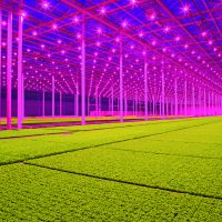 LED lighting, Koppert Cress. Photo: Jan van Berkel